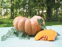 Courge-ambiance